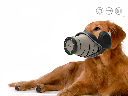 <span>반려견용 에어케어 마스크 (Air Care Mask for Dogs)</span><i>→</i>